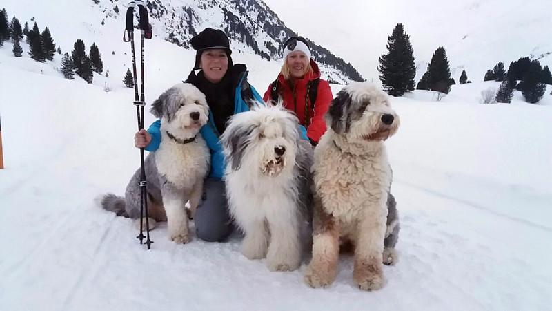 Die Bobtails Dobby, Ella und Sam schicken Urlaubsgrüße aus dem Geierwallihof Vent/Tirol in den Westerwald.